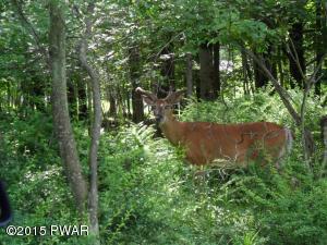 1323 View Dr, Greentown, PA 18426