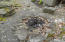 195 Pebble Rock Rd, Lackawaxen, PA 18435