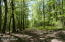 Beautiful PA woods!