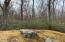 Back yard offers wooded mountain laurel setting