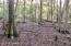 Cypress Pond Area
