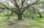 Backyard park-like setting