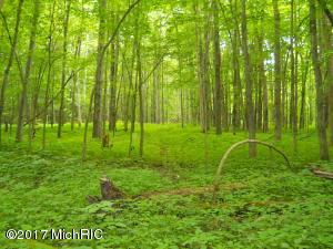 Preserve - Overgrown trail