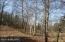 Beautiful birch and hardwoods