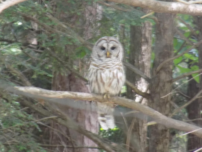 Automatic Owl Wood Lombard Wwwmiifotoscom