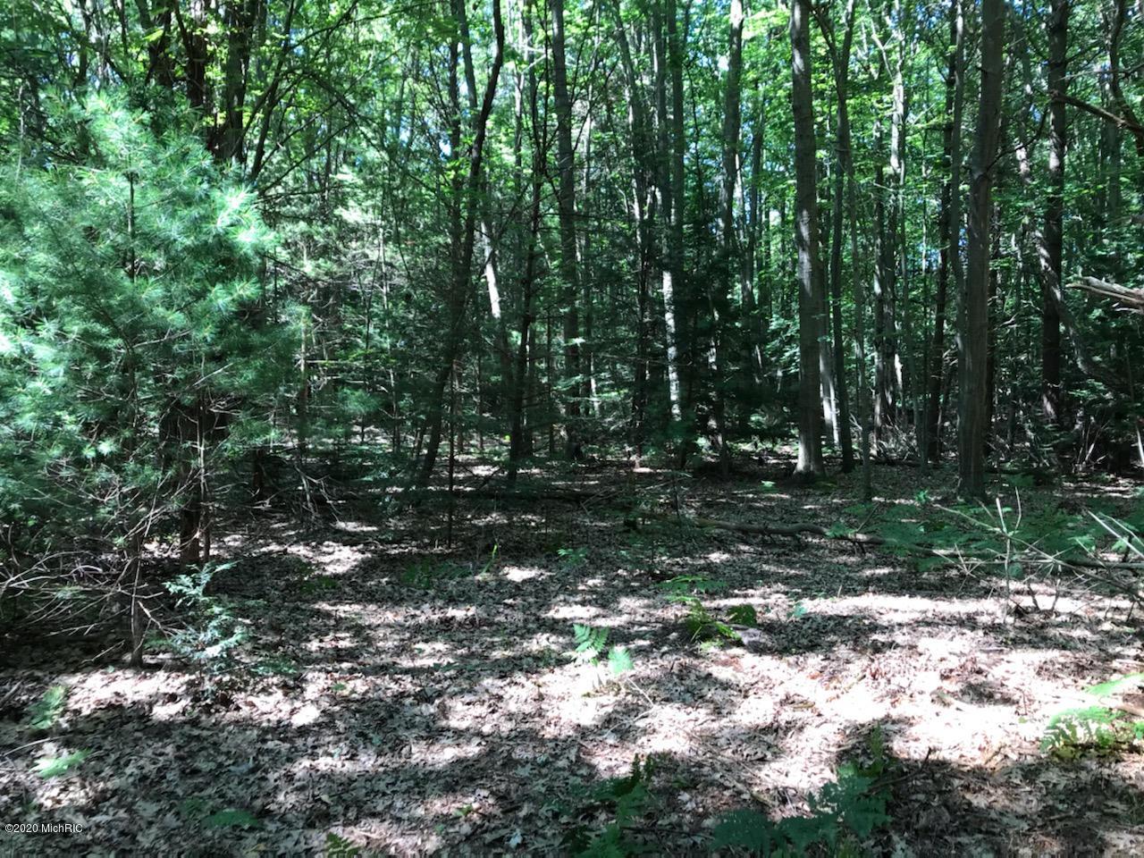 Woods 4