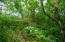Lush foliage on property