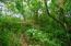 Lush foliage on lot