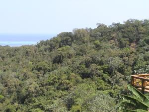 View of Macaw Hill
