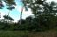 Mature trees & greenery, Flat arable land near Airport, Utila,