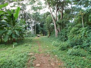 Mature trees & greenery, Flat arable land near Airport, Utila,