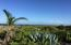 The best of both worlds, dense greenery and the Caribbean ocean!