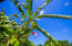 Lush Tropical Fruit trees surround the property