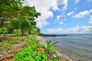 Calabash, Quiet Hill Beach Access, Roatan,