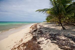 Great View, CLOSE TO THIS BEACH!, Roatan,
