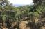 Road to Turtle Beach, Land with Water Views, Roatan,