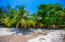 Lush tropical trees on the property