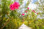 Mature, well maintained gardens with a myriad of colours from the tropical flowers and plants.