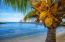 Enjoy lush tropical views from the beach
