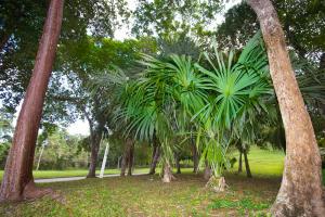 Lush tropical Trees