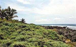 Pumpkin Hill Lot with View, Utila,