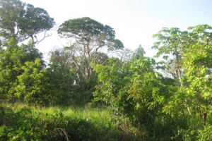 West of airport, Nearly 1/2 acre Swanix Ridge, Utila,