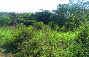 Quiet & Serene home site, Level lot ready to build, Utila,