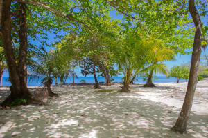 This lot is nestled under lush tropical fruit trees and beach front in Palmetto Bay