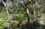 Amazing Price 0.19 acres, Perfect Pumpkin Plot, Utila,