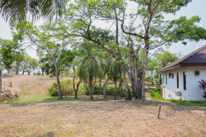 Lush tropical trees surround the property