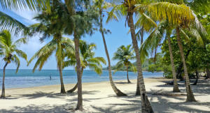 Access, Jungle View lot with Beach, Roatan,