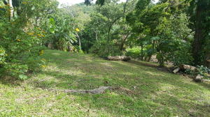 Fosters drive, West End home site, Roatan,