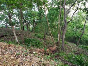 West End, West End Lot 0.08 acre, Roatan,