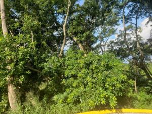 Sandy Bay, Hillside Lot, Roatan,