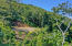 Financing available, Great North Shore colors, Roatan,