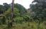 main highway, Adlie, Roatan,