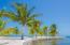 Tropical Palm trees line the beach at Pangea Beach