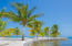 Palm tree line the waterfront at Pangea Beach