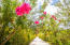 Enjoy the lush tropical gardens of Coral Views