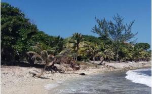 - Sliver Garden - South Shore, 0.375 Acre Beachfront Lot, Utila,
