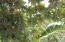 Johnson Bight, Lot # 9 Palm Beach Area, Roatan,