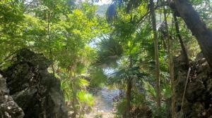 Only, 73 Ft. Waterfront, Watefront Lot # 5, Boat Access, Roatan,