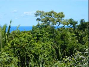 11.75 acres Punta Gorda, Roatan,