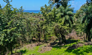 Rentals or Large Estate, Great Location for Multiple, Roatan,