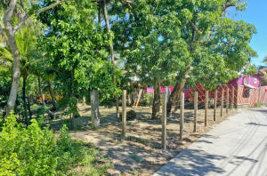 Trees, Sandy Bay with Lots of Fruit, Roatan,