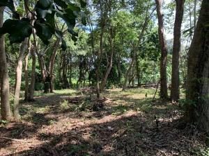 Home Site in El Corral, 0.25 Acre Fertile Build-ready, Utila,