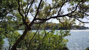 0.731 Acre, 218 Ft Waterfront, Roatan,