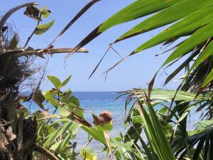 Parrot Tree Plantation, Waterfront Lot # 9, Roatan,
