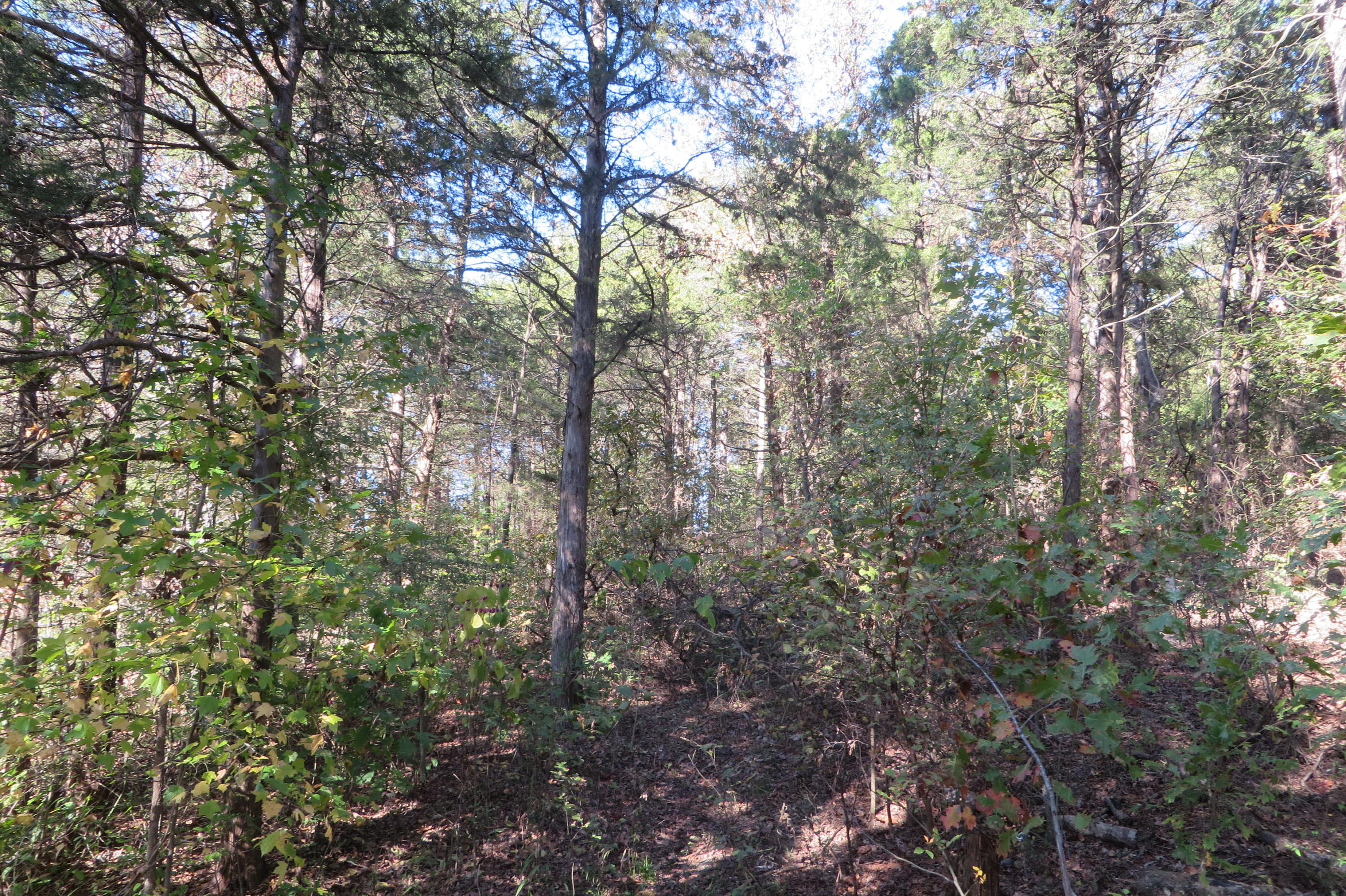 Large photo 4 of land for sale at  Highway 64 , London, AR, listed by Moore And Co.