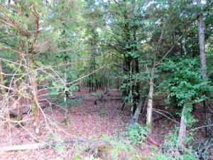 15 Oak Meadows, Dover, AR 72837